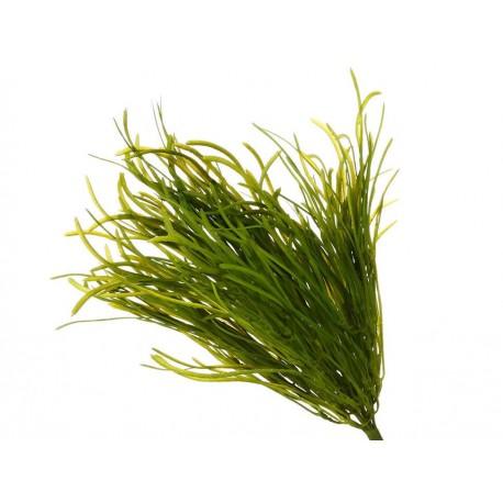 Haus Pasto Piner Verde - Envío Gratuito